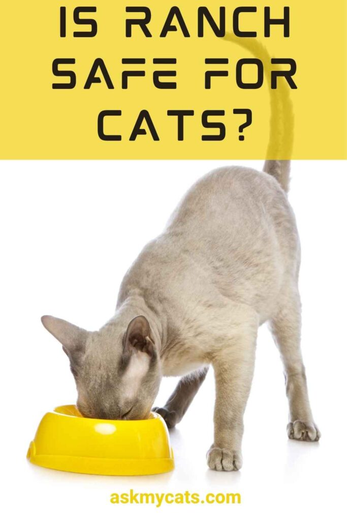 Is Ranch Safe For Cats?