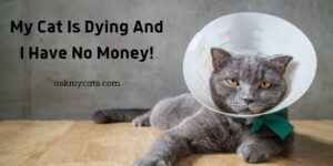 My Cat Is Dying And I Have No Money! What Should I Do Now?