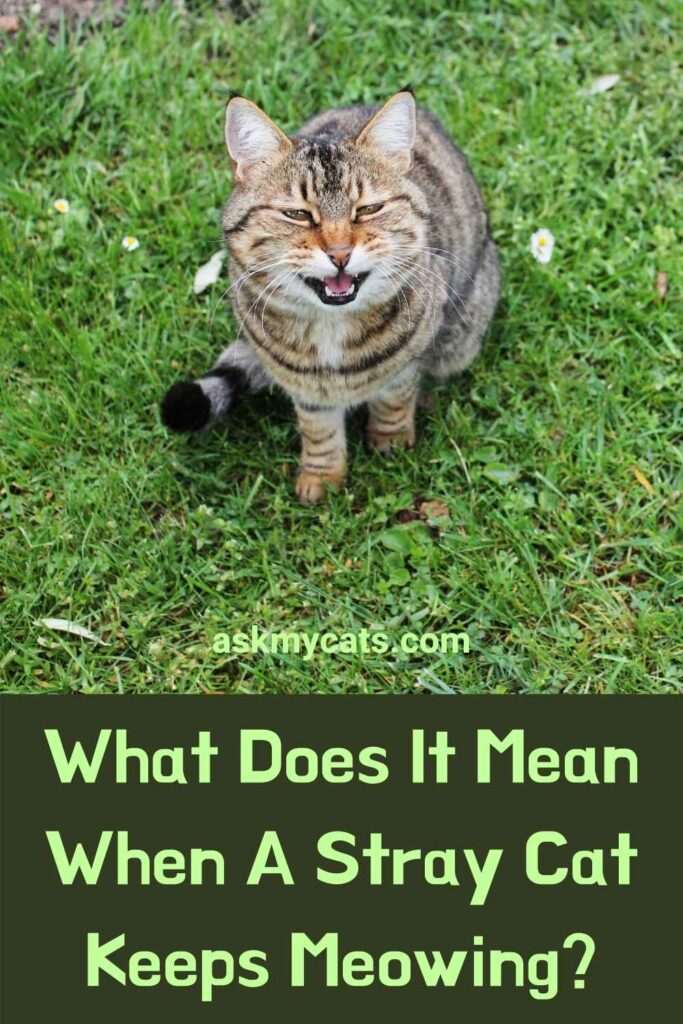 What Does It Mean When A Stray Cat Keeps Meowing?