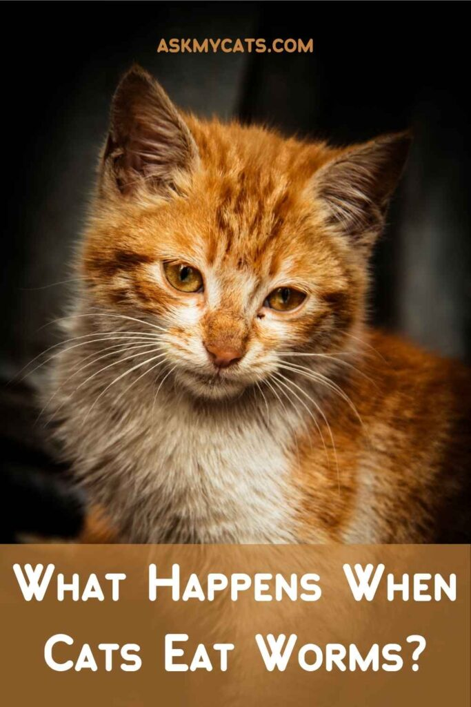 What Happens When Cats Eat Worms?