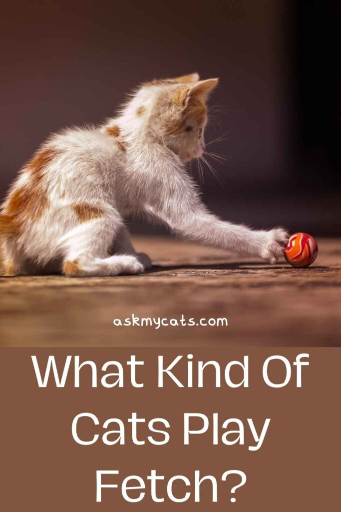 What Kind Of Cats Play Fetch?