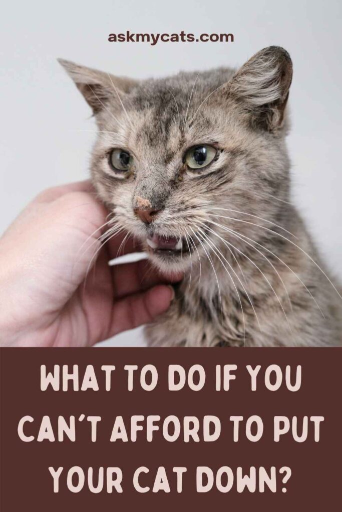 What To Do If You Can't Afford To Put Your Cat Down?