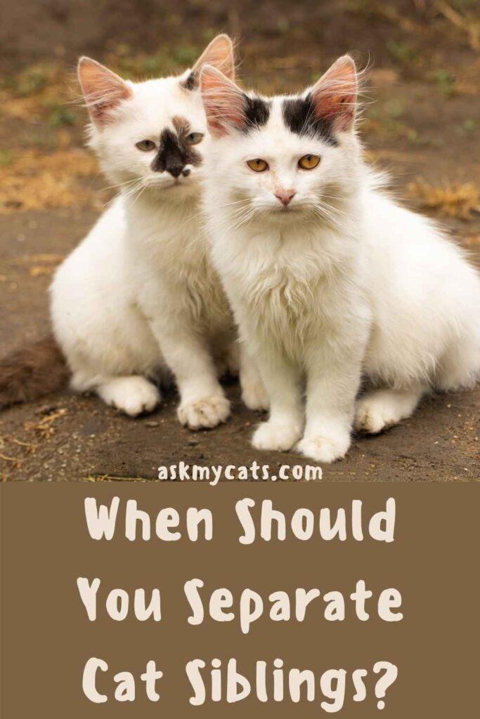 When Should You Separate Cat Siblings?