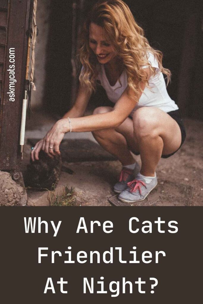 Why Are Cats Friendlier At Night?