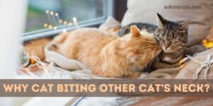 Cat Biting Other Cat's Neck? What's Wrong With Them?