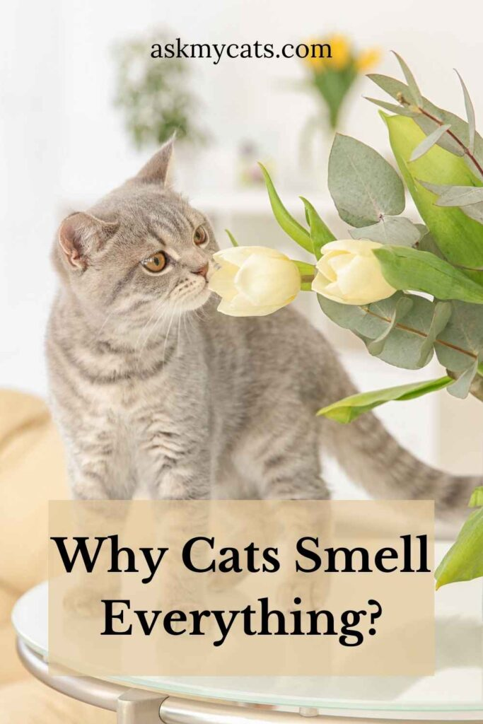Why Cats Smell Everything?