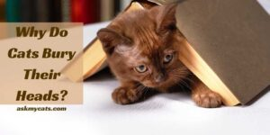 Why Do Cats Bury Their Heads? Know These Funny Reasons!