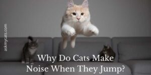 Why Do Cats Make Noise When They Jump? Is It Normal For Them?