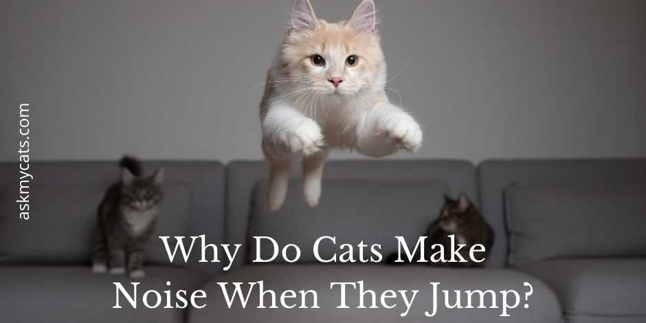 Why Do Cats Make Noise When They Jump