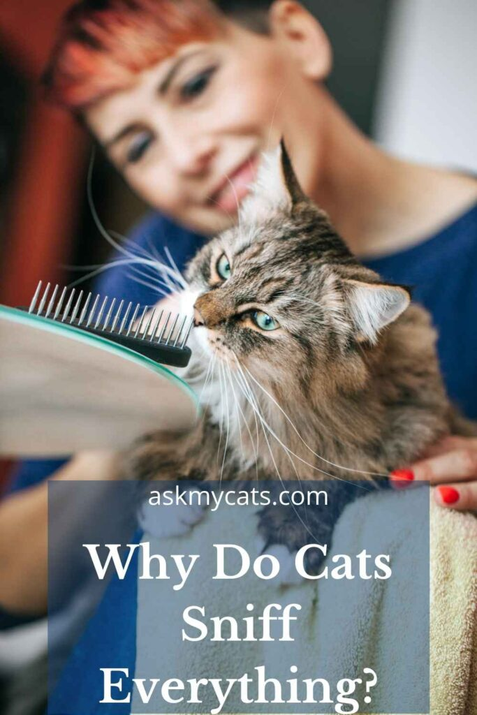 Why Do Cats Sniff Everything?