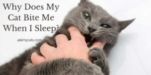 Why Does My Cat Bite Me When I Sleep? Is Your Pet Turning Revengeful?