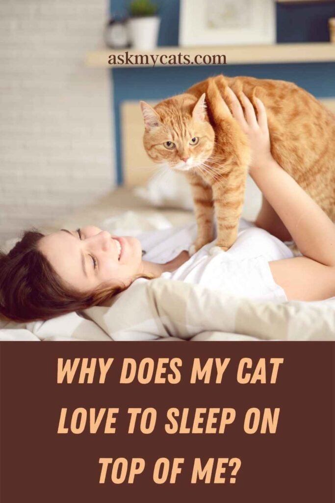 Why Does My Cat Love To Sleep on Top of Me?