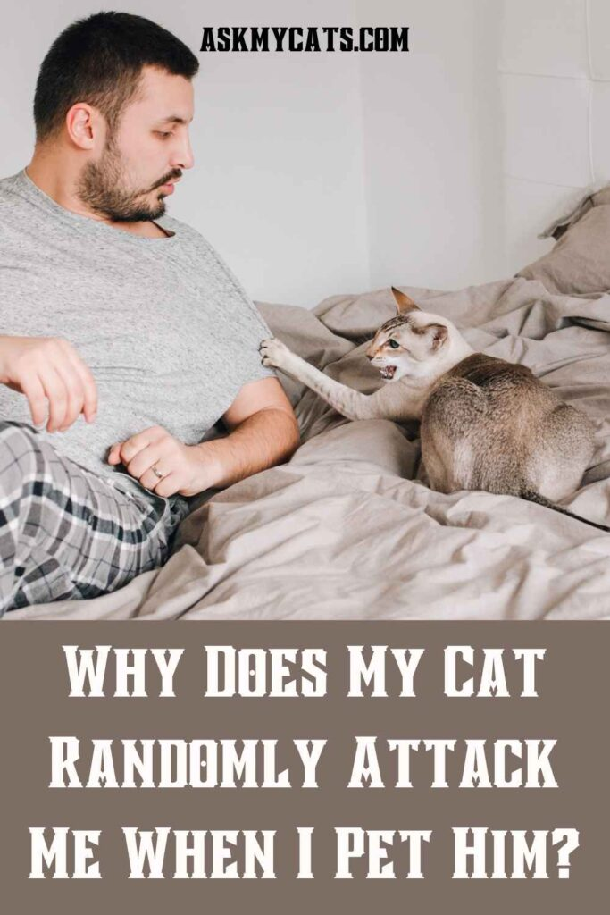 Why Does My Cat Randomly Attack Me When I Pet Him?