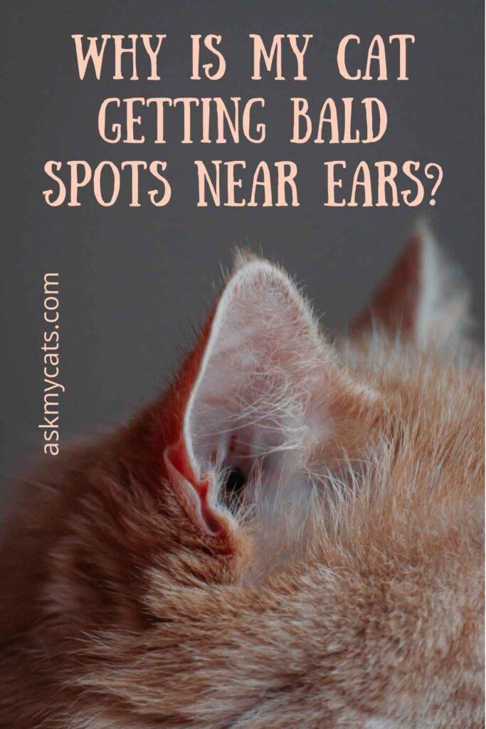 Why Is My Cat Getting Bald Spots Near Ears?