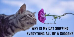 Why Is My Cat Sniffing Everything All Of A Sudden? Is It OK?