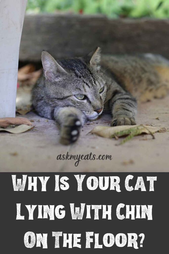 Why Is Your Cat Lying With Chin On The Floor?