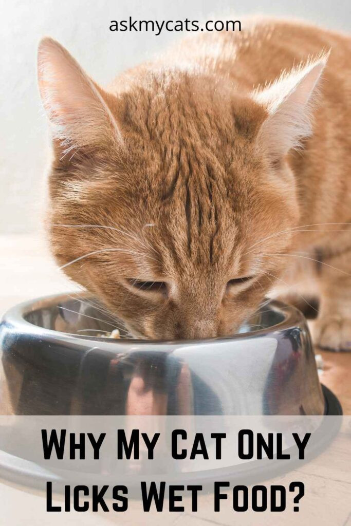 Why My Cat Only Licks Wet Food?