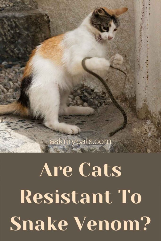 Are Cats Resistant To Snake Venom?