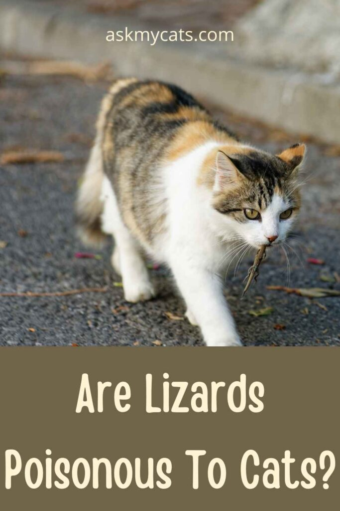 Are Lizards Poisonous To Cats?