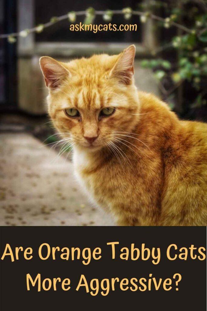 Are Orange Tabby Cats More Aggressive?