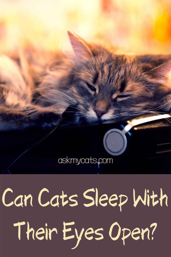 Can Cats Sleep With Their Eyes Open?