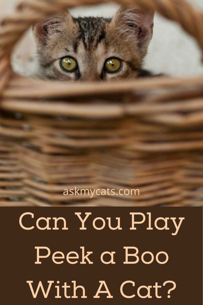 Can You Play Peek a Boo With A Cat?