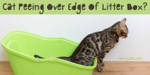 Cat Peeing Over Edge Of Litter Box? Are You Tired Of Their Behavior?