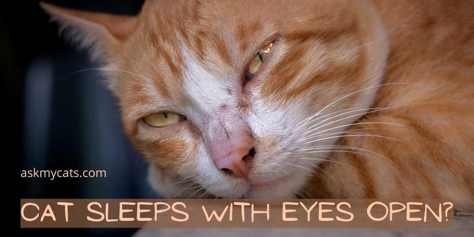 Cat Sleeps With Eyes Open