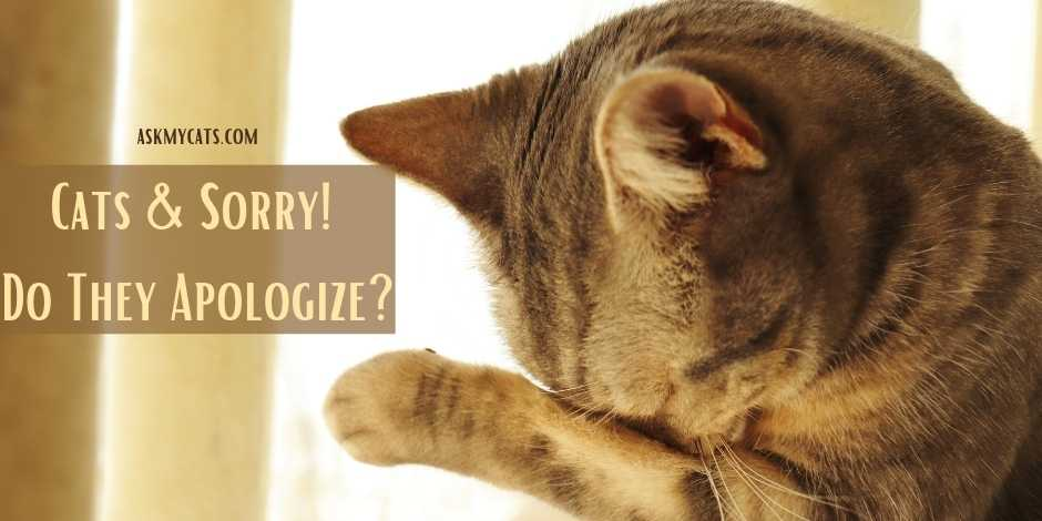 Cats Sorry Do They Apologize
