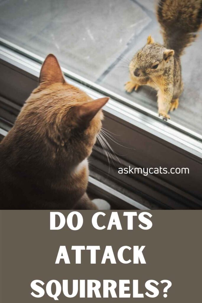 Do Cats Attack Squirrels?