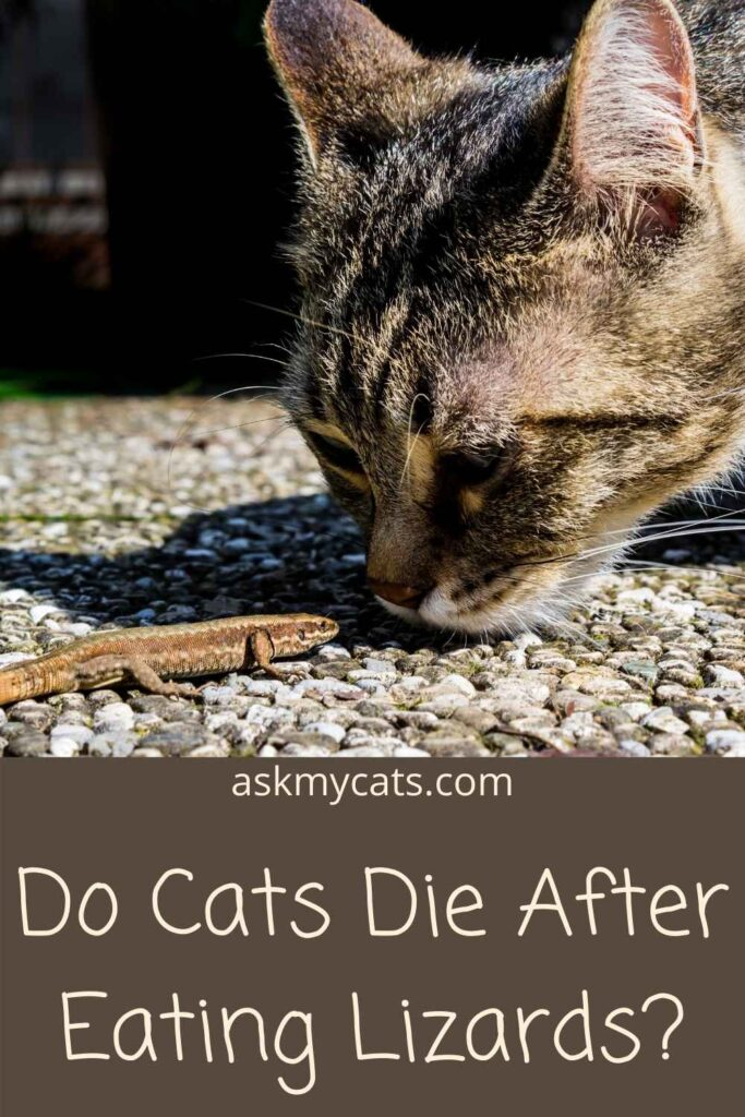 Do Cats Die After Eating Lizards?
