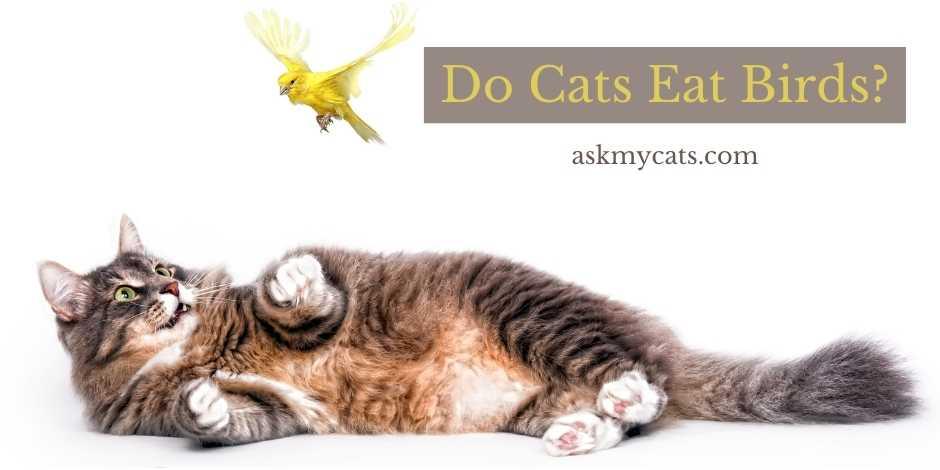 Do Cats Eat Birds