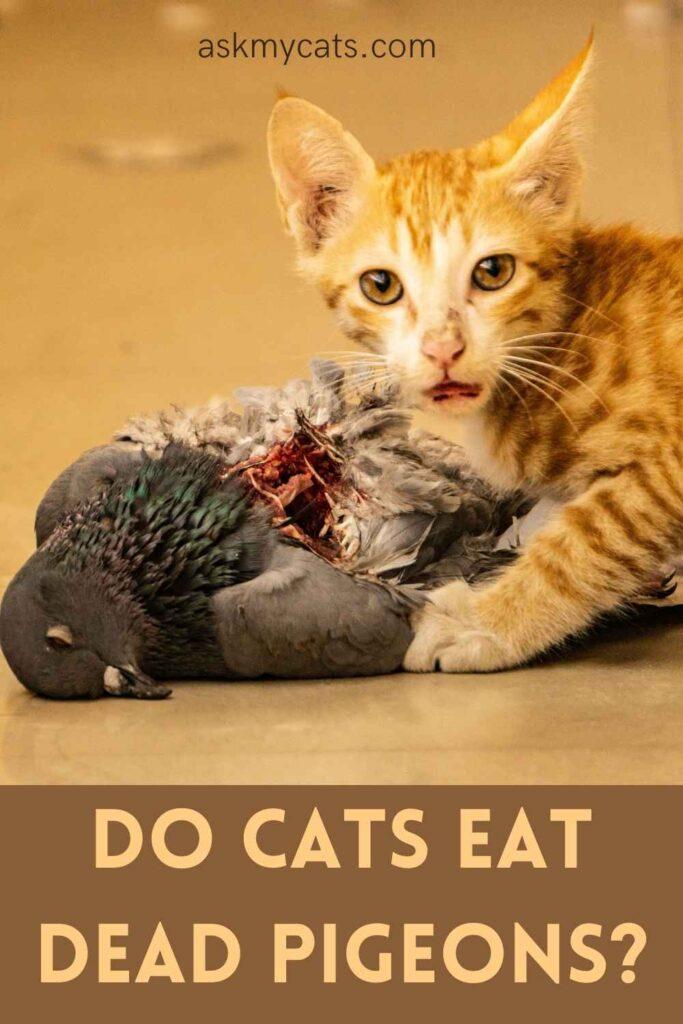 Do Cats Eat Dead Pigeons?