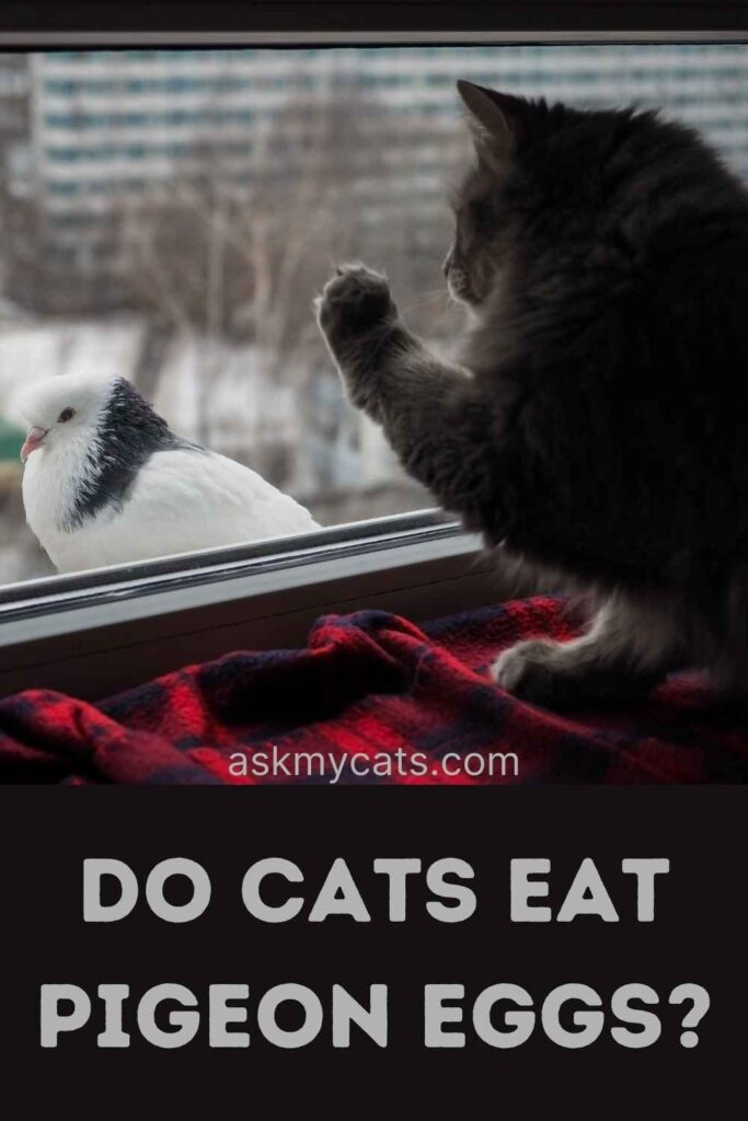 Do Cats Eat Pigeon Eggs?