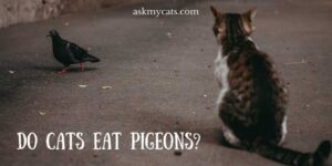 Do Cats Eat Pigeons? Can We Include Them In Their Normal Diet?