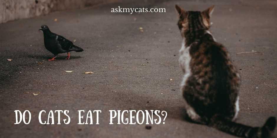 Do Cats Eat Pigeons