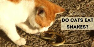 Do Cats Eat Snakes? How Gross Is Their Diet?