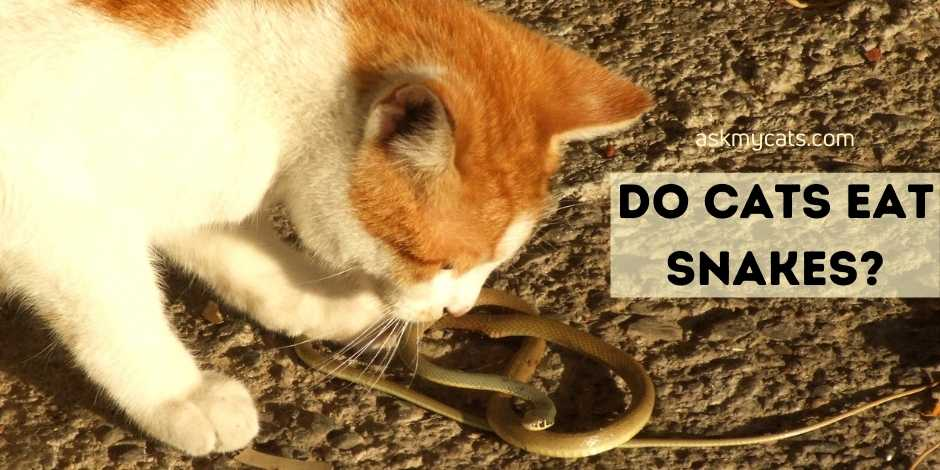 Do Cats Eat Snakes