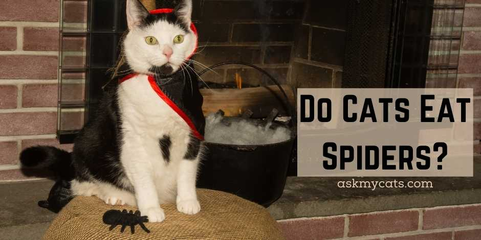 Do Cats Eat Spiders