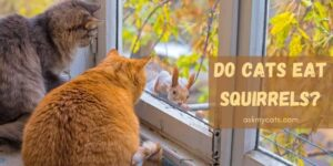 Do Cats Eat Squirrels? Know About Their Hunting Techniques!