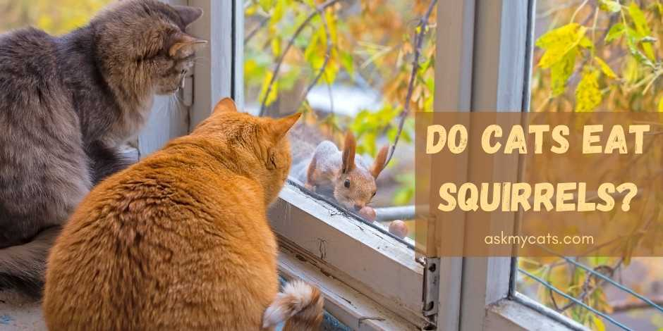 Do Cats Eat Squirrels