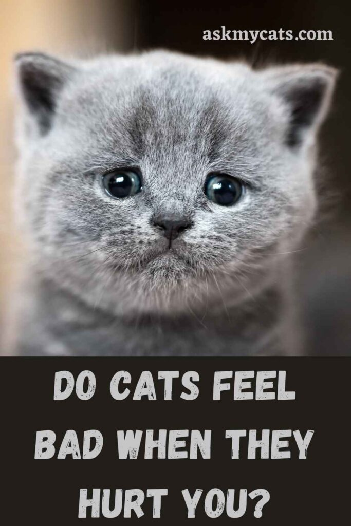Do Cats Feel Bad When They Hurt You?