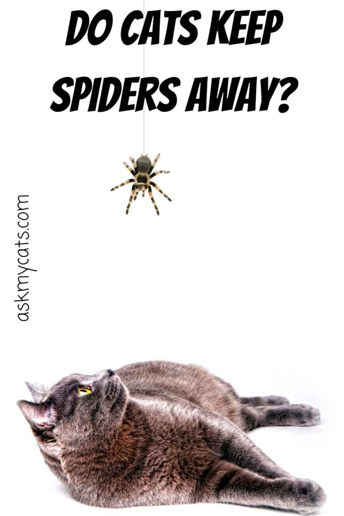 Do Cats Keep Spiders Away?
