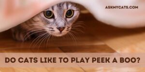 Do Cats Like To Play Peek A Boo? Is It A Fun Thing?