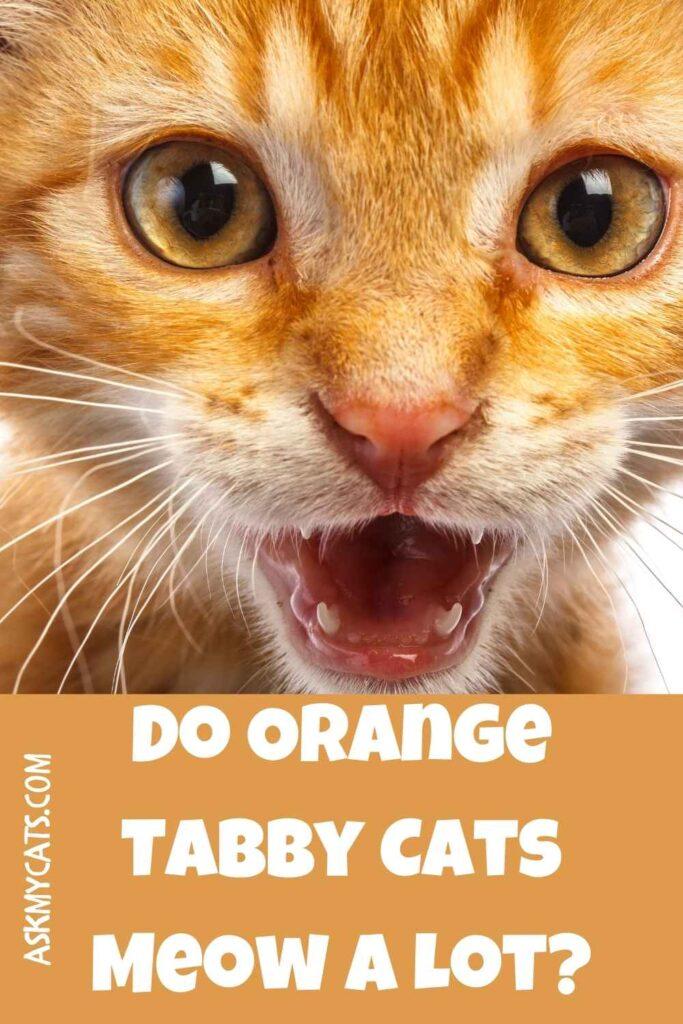 Do Orange Tabby Cats Meow A Lot?