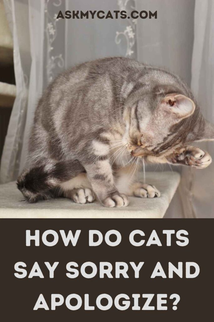 How Do Cats Say Sorry And Apologize?