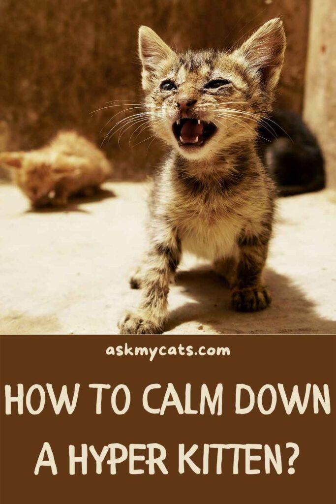 How To Calm Down A Hyper Kitten?