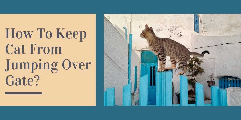 How To Keep Cat From Jumping Over Gate