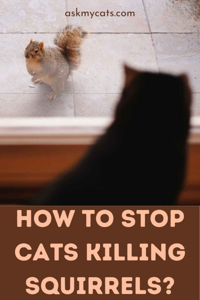 How to Stop Cats Killing Squirrels?
