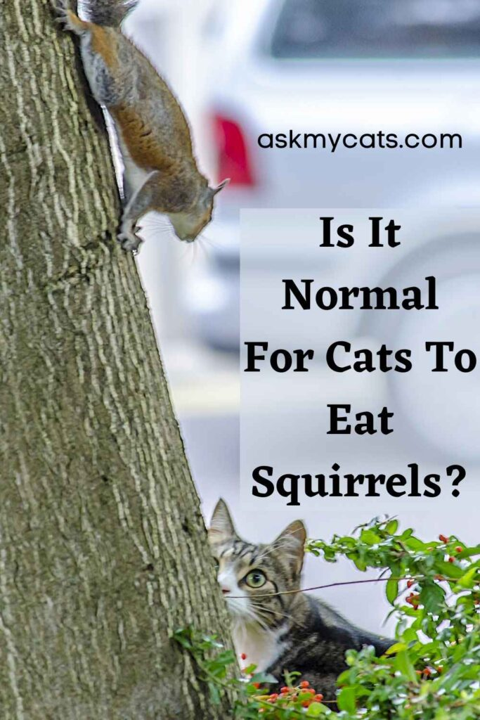 Is It Normal For Cats To Eat Squirrels?